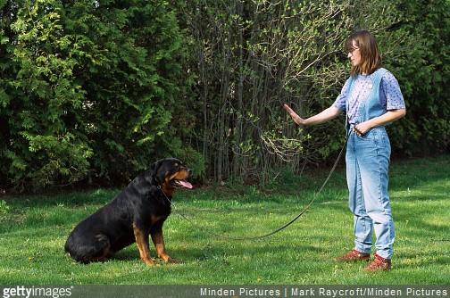 3 astuces de vétérinaire pour dresser son chienPhotos de