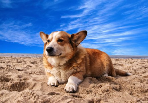 Zoom sur l'assurance pour chien