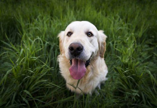 Le top 5 des chiens préférés des Français