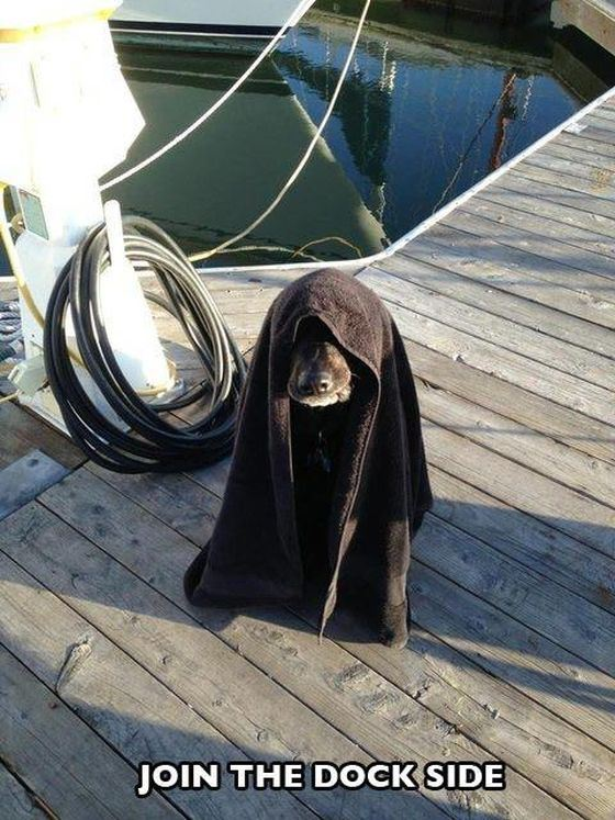 La photo humoristique (spéciale Star Wars). Source : http://cuteoverload.com/
