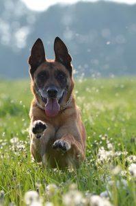 top-chiens-preferes-francais-3